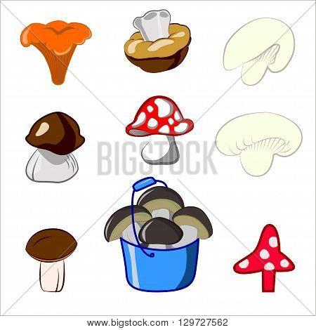Vector set cartoon illustration of mushrooms. Boletus edulis chanterelle mushroom boletus. Network of sdobnyh yadoaityh and mushrooms