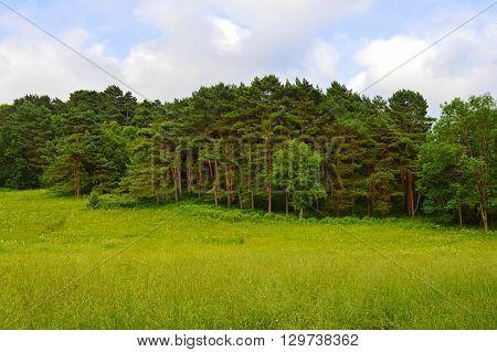 Pine Grove Park in Kislovodsk