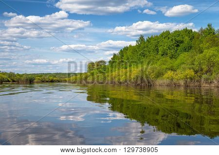 Plants and bushes growing along the banks of the  River, Russia