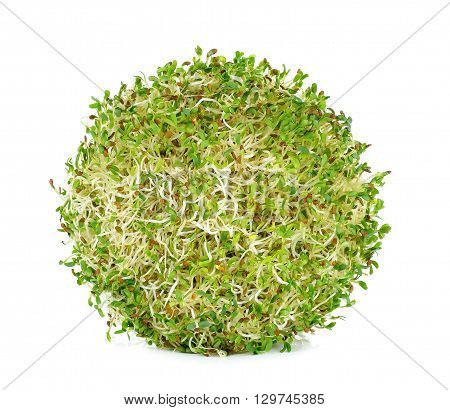 Alfalfa Sprouts On White Background