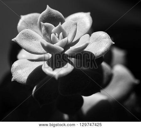 Cactus close-up freakish form . Macro photography.