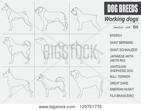 Dog breeds. Working (watching) dog set icon. Flat style. Vector illustration