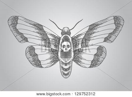 Death head moth. Hand drawn vector stock illustration.