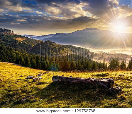 Coniferous Forest In Foggy Romanian Mountains At Sunset