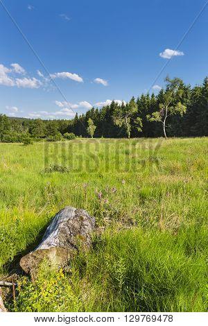Green Landscape In The High Fens, Belgium