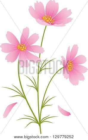 Kosmeya flowers on a white background. eps 10