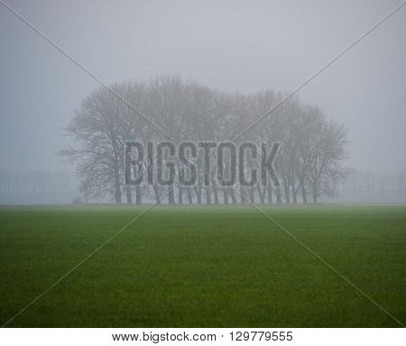green wheat field and trees in the fog