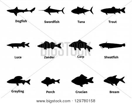 Vector illustration silhouette of fish with an inscription. Freshwater and saltwater fish. Isolated on white background. Silhouettes of sea and river fish.