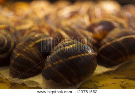Group of snail shells under the sunlight