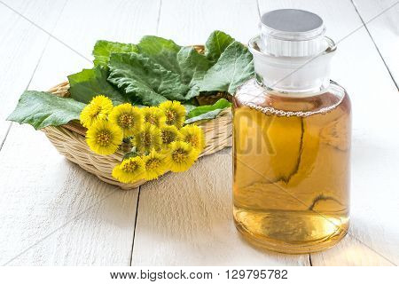 Medicinal plant coltsfoot (Tussilago farfara). The infusion leaves and flowers in a basket