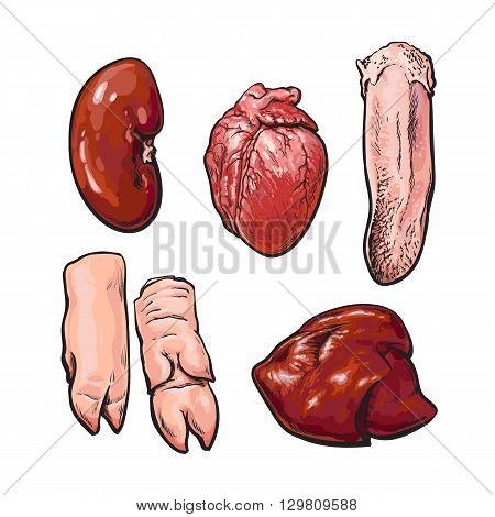 Pork offal, vector sketch narisovany by hand, isolated set of pig organs, animal by-products on a white background, Sven fresh meat subrodukty ungulate, realistic illustration