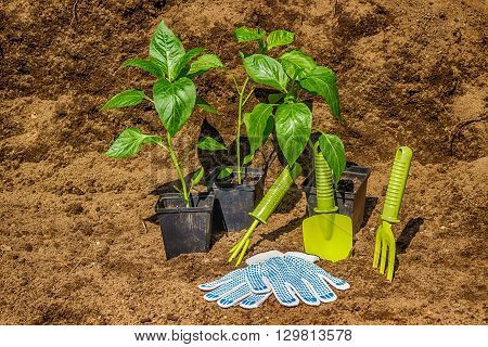 Pot With Seedlings  Garden Tools Equipment Gloves Background  Black Soil