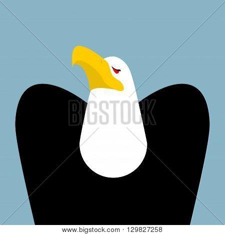 Bald Eagle. Birds Of Prey Portrait. Hawk On Blue Background
