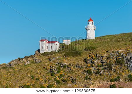 Lighthouse at Taiaroa Head Otago Peninsula Dunedin New Zealand.