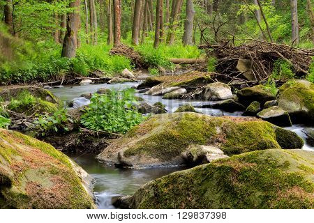 Small Wild River In Bohemian Forest