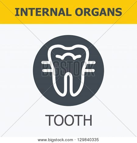 Internal organs - tooth. Family and a healthy lifestyle. Medical infographic icons, human organs, body anatomy. Vector icons of internal human organs Flat design. Internal organs icons.