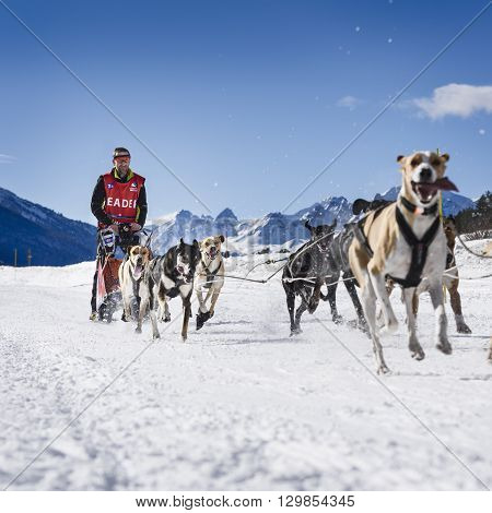 AUSSOIS SUR ARC VANOISE FRANCE - JANUARY 20 2016 - the GRANDE ODYSSEE the hardest mushers race in savoie Mont-Blanc Remy COSTE french musher Vanoise Alps