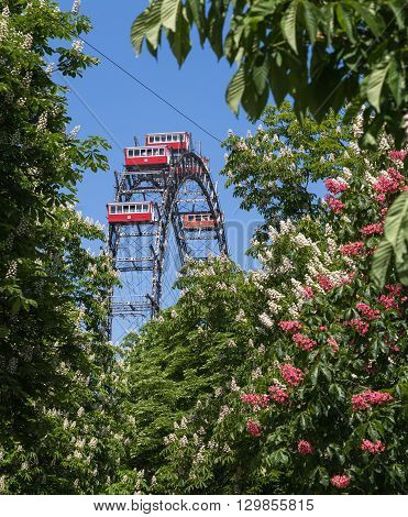VIENNA AUSTRIA - 8TH MAY 2016: A view towards the Riesenrad during the spring showing colourful flowers and trees.