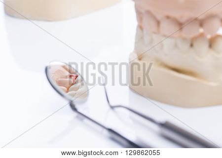 Teeth Molds With Basic Dental Tools On A Bright White Table