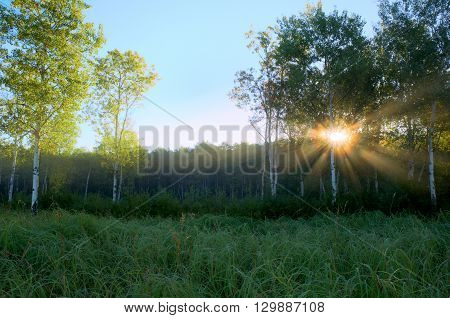 Dramatic Crepuscular Rays in the Foggy Aspen Meadow by the Rice Creek North Regional Trail in Shoreview Minnesota