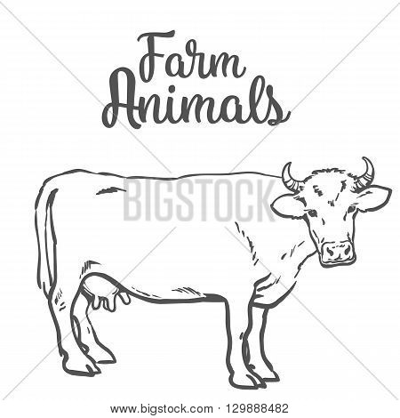 sketch of a cow on a white background one isolated hoofed animal, farm cattle. Domestic cattle, linear illustration of a horned cow and dairy,