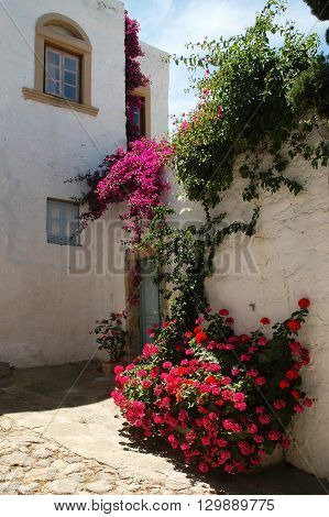 Flowers in the backyard of a house on the Greek island of Patmos