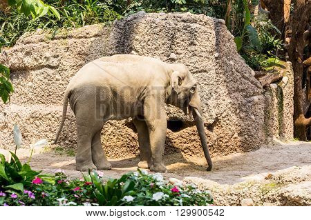 New Elephant Compound In Zurich Zoo