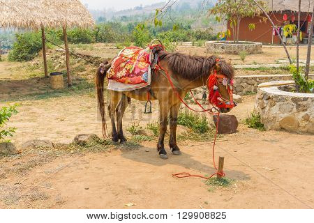 PAI, THAILAND - April 10, 2016 : Horse service traveler at countryside of Thailand at Santichon village in Pai city Mae Hong Son Province, Thailand