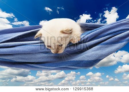 White kitten in a hammock. Cute white kitten in a blue hammock having rest, look down, curious at blue sky background. Adorable pet. Small heartwarming kitten. Little cat. High key
