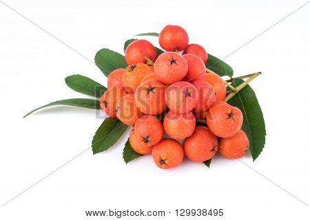 Rowan berries with leaves on white background. Closeup.