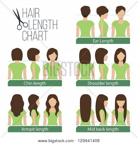 Set of different hair length for haircuts and hairstyles - short medium and long length. Vector.