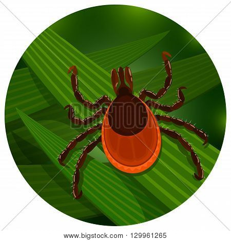 Mite in the tall green grass flat vector illustration, mite hiding in the grass, tick-borne mite color icon, danger tick bug in nature grass, color illustration in circle