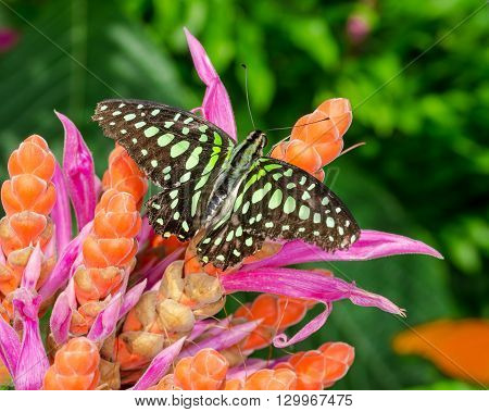 Beautiful vibrant image of a butterfly on flowers