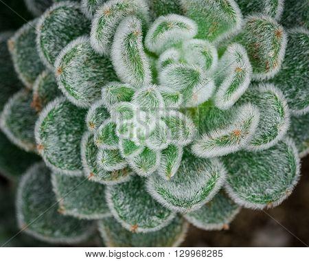 Beautiful close up image of a cactus