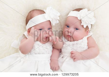 Twin sisters babies lying together on white soft fur blanket. Wearing elegant white dresses