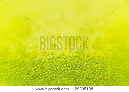 Abstract bright green spring background with blur and sparkles. Spring background. Summer background. Texture.