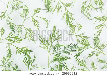 Green dill on a white background. Pattern. Ornament. Food background