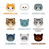 Kawaii cat breed head icons, set II poster