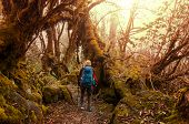 Hiker in Himalayan jungles, Nepal, Kanchenjunga region poster