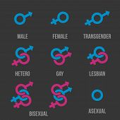 Sexual orientation vector icons. Sexual gender orientation, human orientation, heterosexual anf bisexual orientation illustration poster