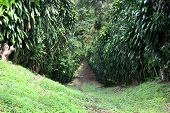 path in the rainforest at a coffee plantation. Nicaragua poster