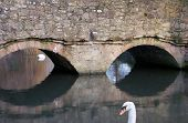 reflective bridge arches with white swan head in foreground poster