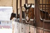 The horse peeking out of the stall poster