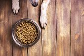 Bowl of dry kibble dog food and dog's paws and nose over grunge wooden floor poster