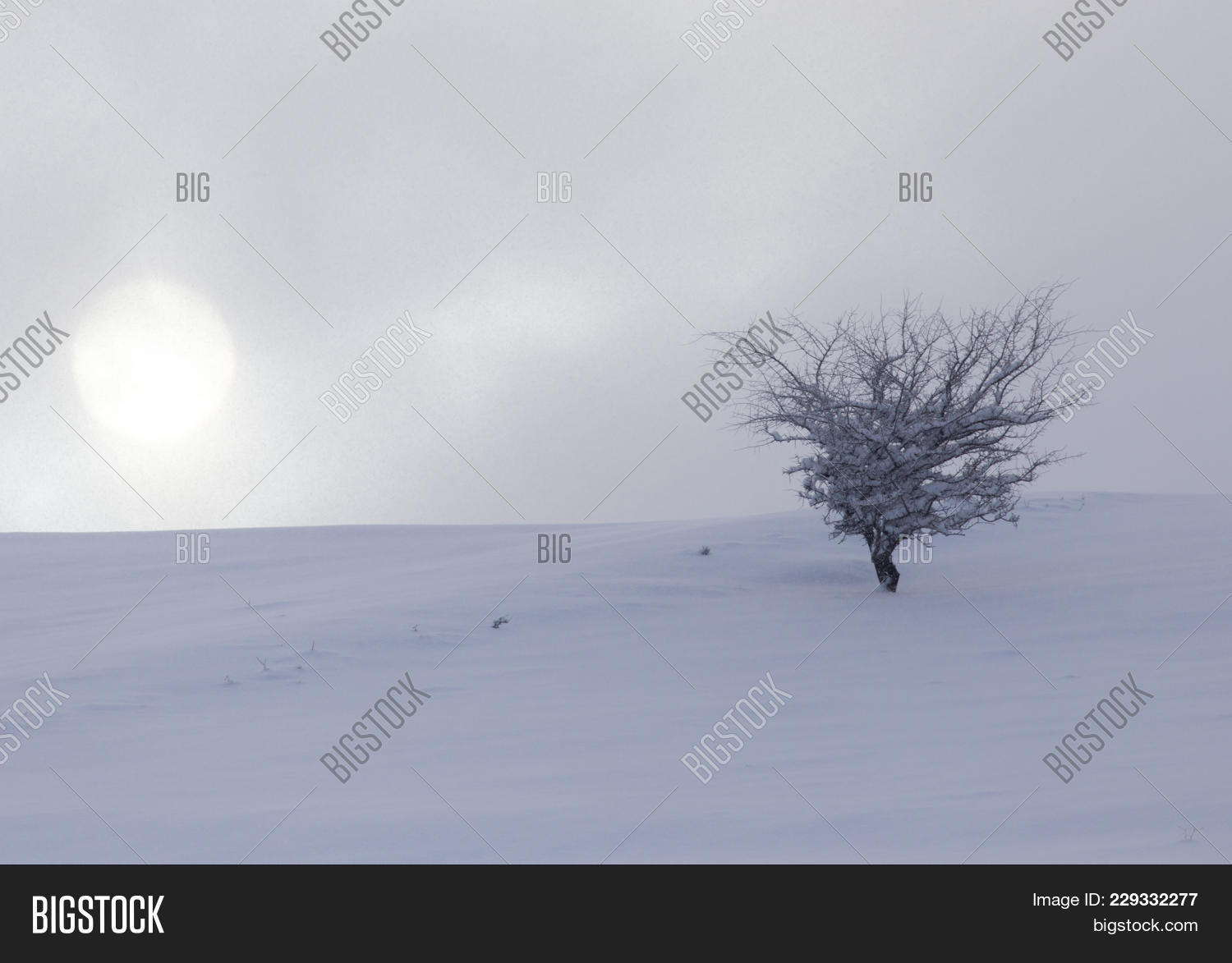 Tree in the snow powerpoint template PowerPoint Template - Tree in ...