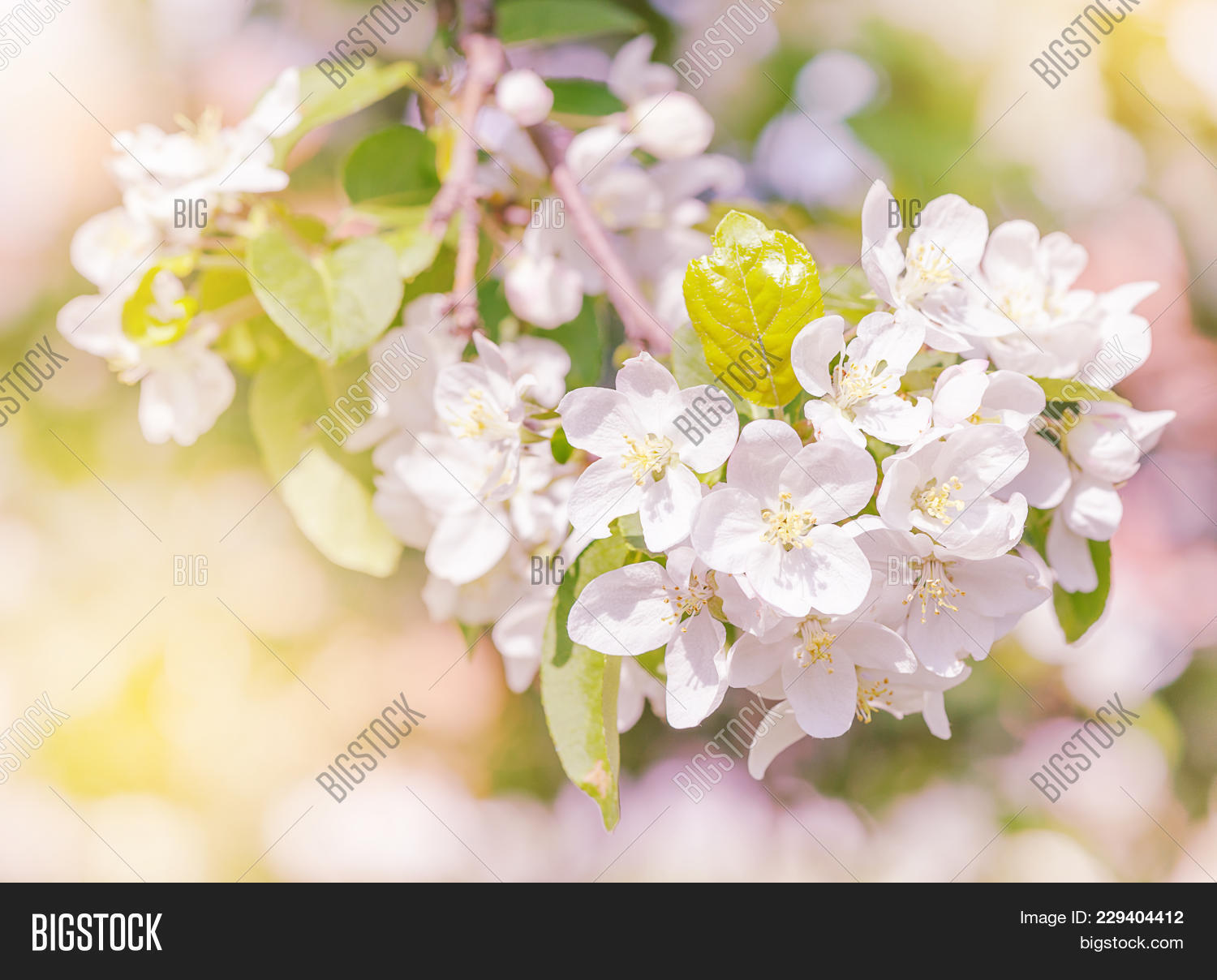 Delicate White Flowers Image Photo Free Trial Bigstock