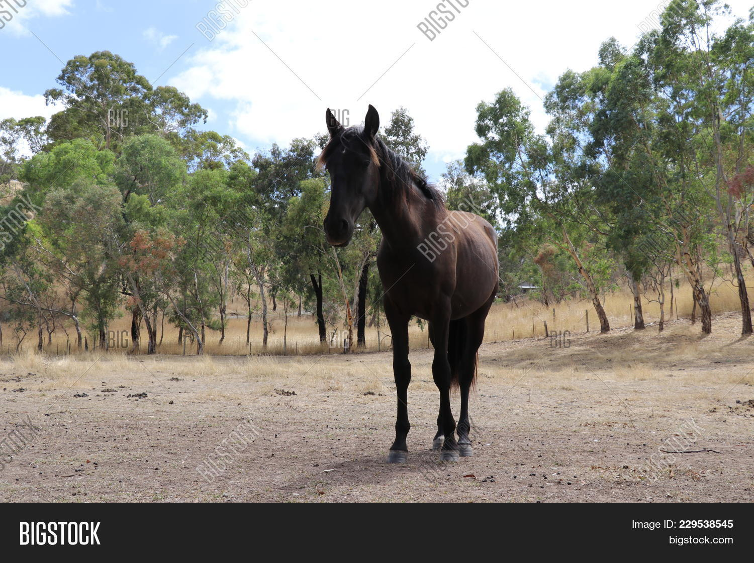 Young Black Horse Powerpoint Template Young Black Horse Powerpoint