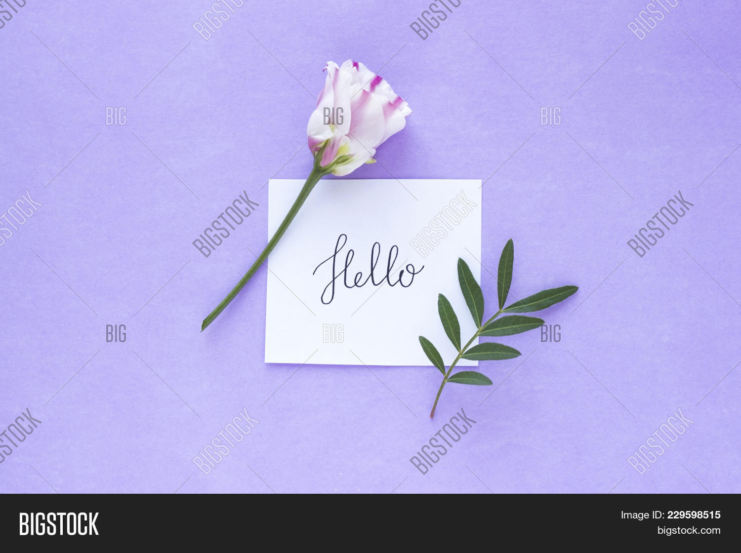 Pink White Flower Powerpoint Background PowerPoint Template Pink - Best of flower powerpoint background concept