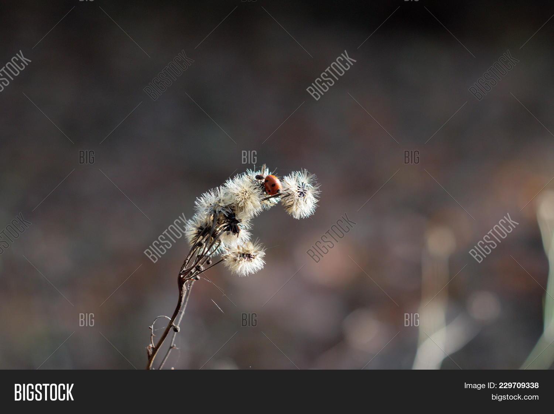 Ladybird on a stalk PowerPoint Template - Ladybird on a stalk ...