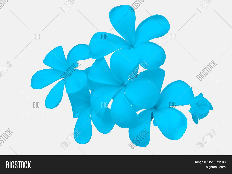 Blue Flower Powerpoint Background Powerpoint Template Blue Flower